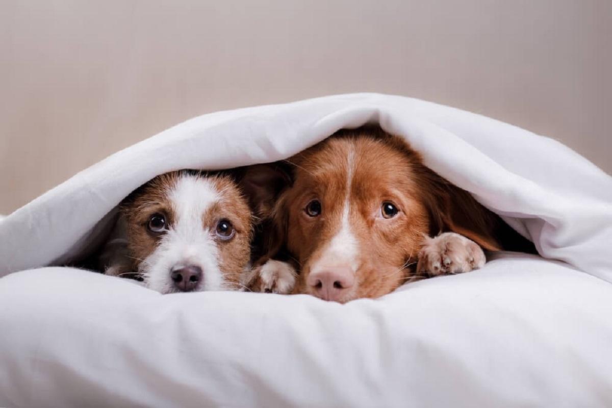 un cucciolo e un cane adulto