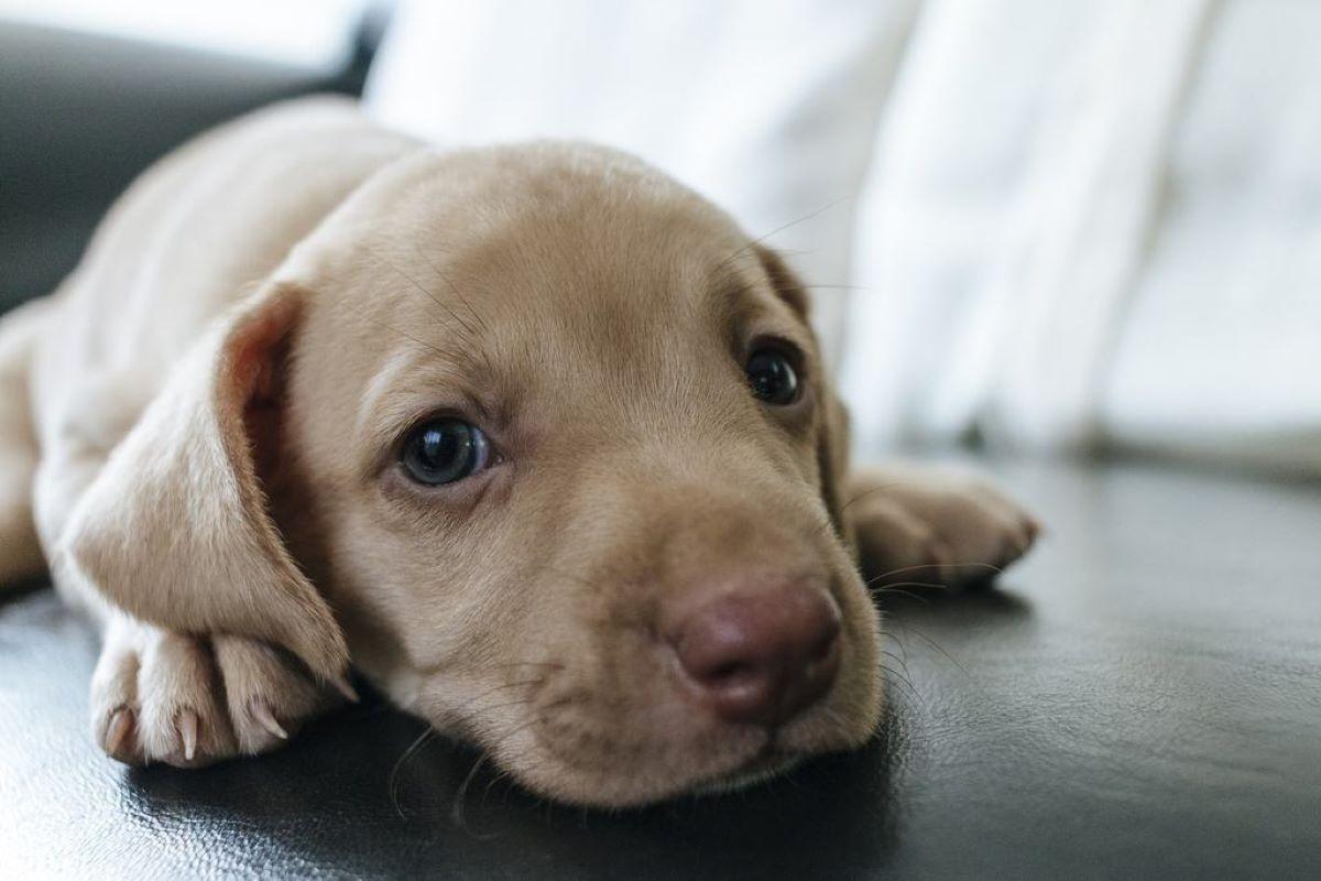 Cuccioli di cane cosa non fare: tutti gli errori comuni