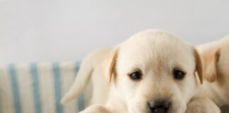 cuccioli di cane cosa non fare