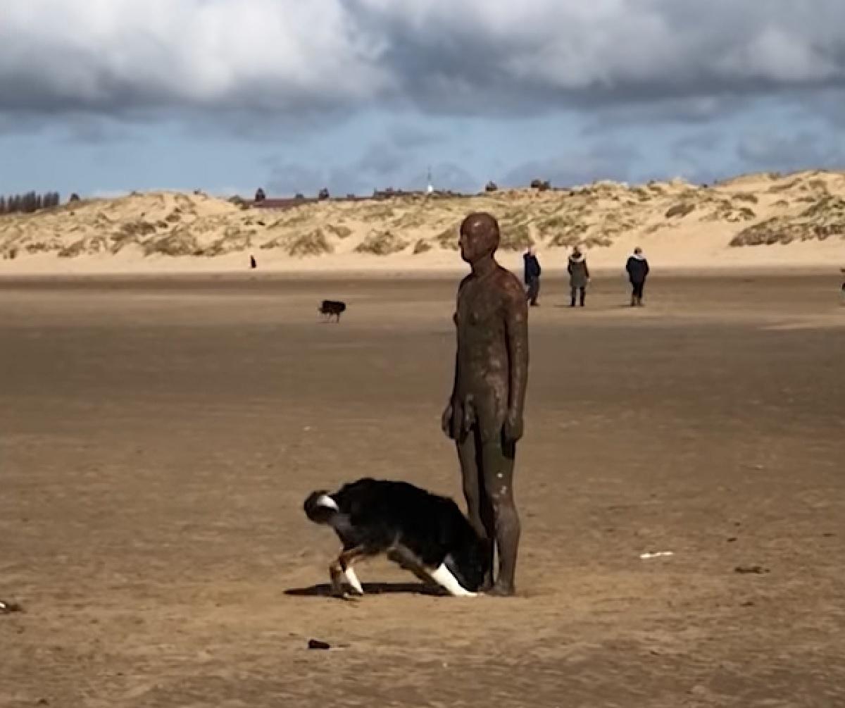hurley cucciolo una statua in spiaggia