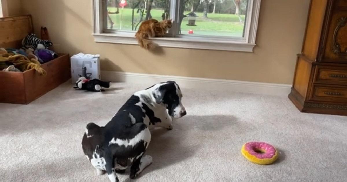 cucciolo di alano e il gatto amano fare birdwatching insieme