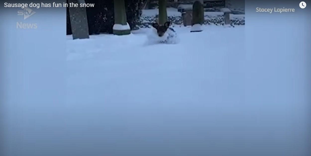 cucciolo di bassotto corre felice in mezzo alla neve