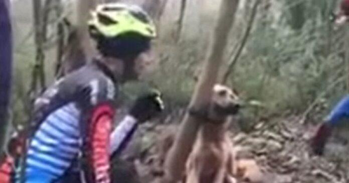 ciclisti salvano cane