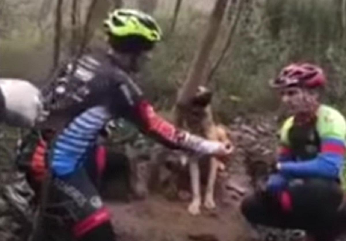 Cucciolo di cane abbandonato e legato viene trovato da alcuni ciclisti, la toccante scena in video