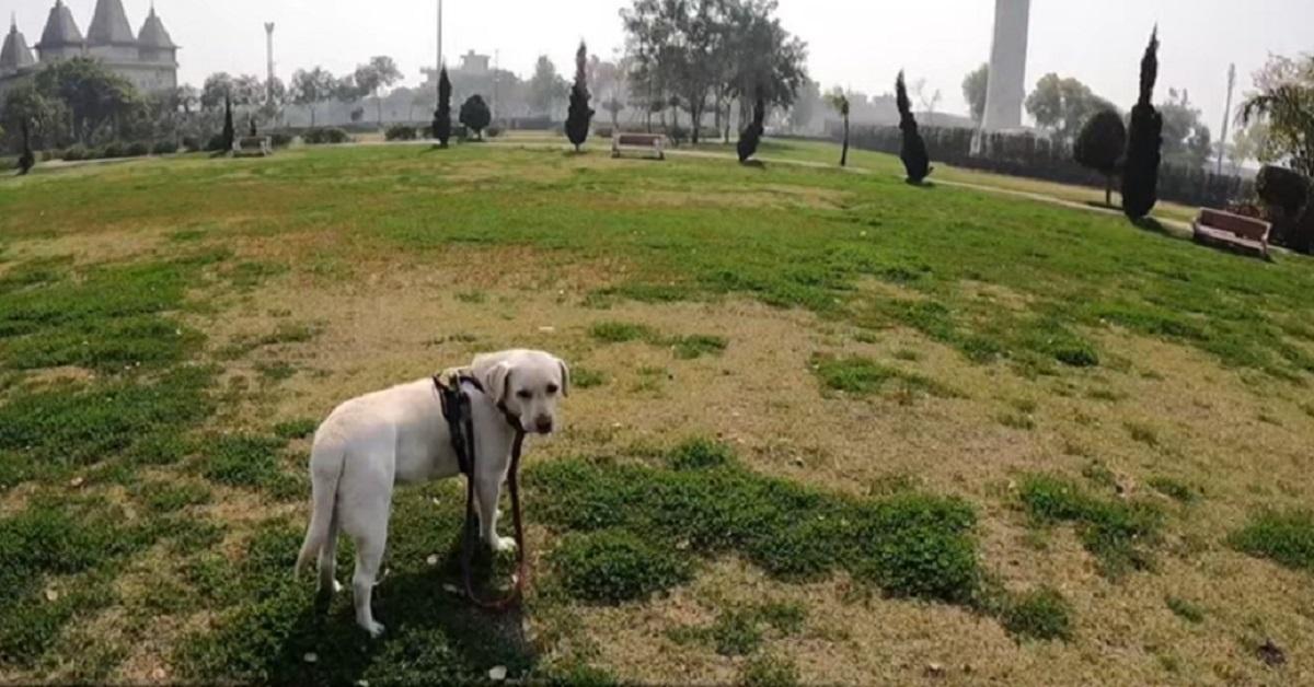 cucciolo di cane si siede sulle panchine
