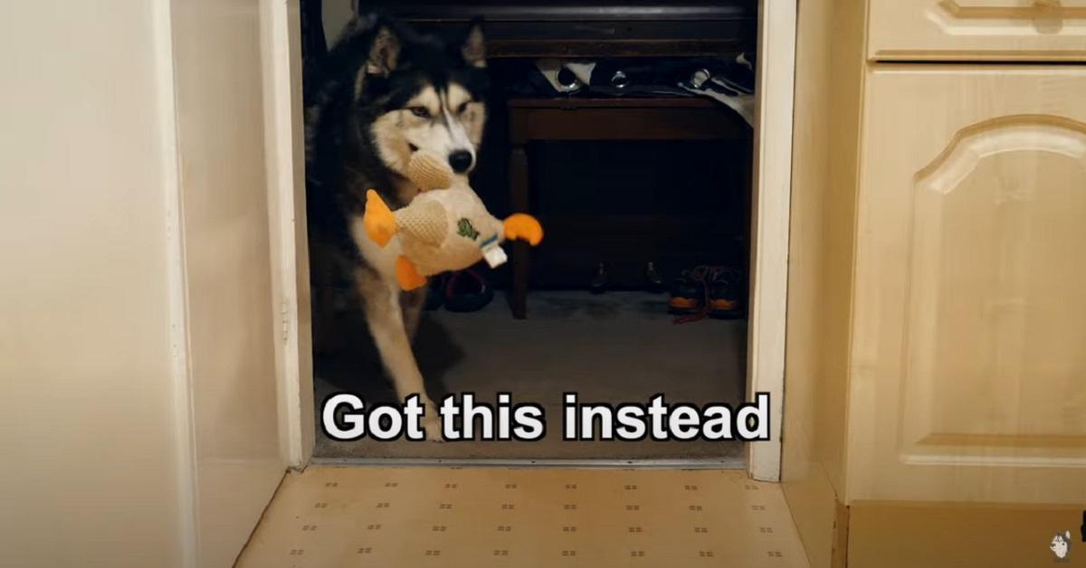 Il cucciolo di cane che vuole a tutti i costi un pancake (VIDEO)