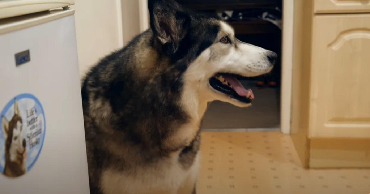 cucciolo di cane che vuole a tutti i costi un pancake