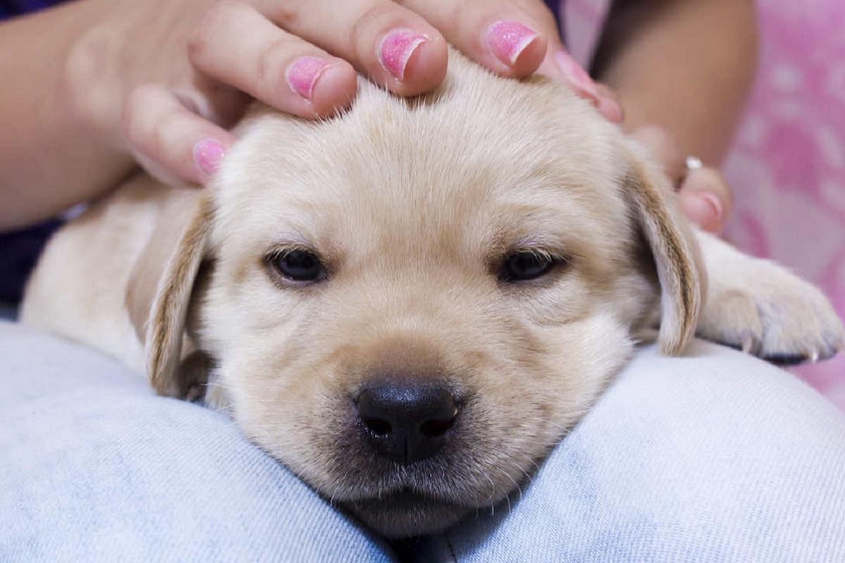 Cucciolo di cane non si concentra: qualcosa non va?