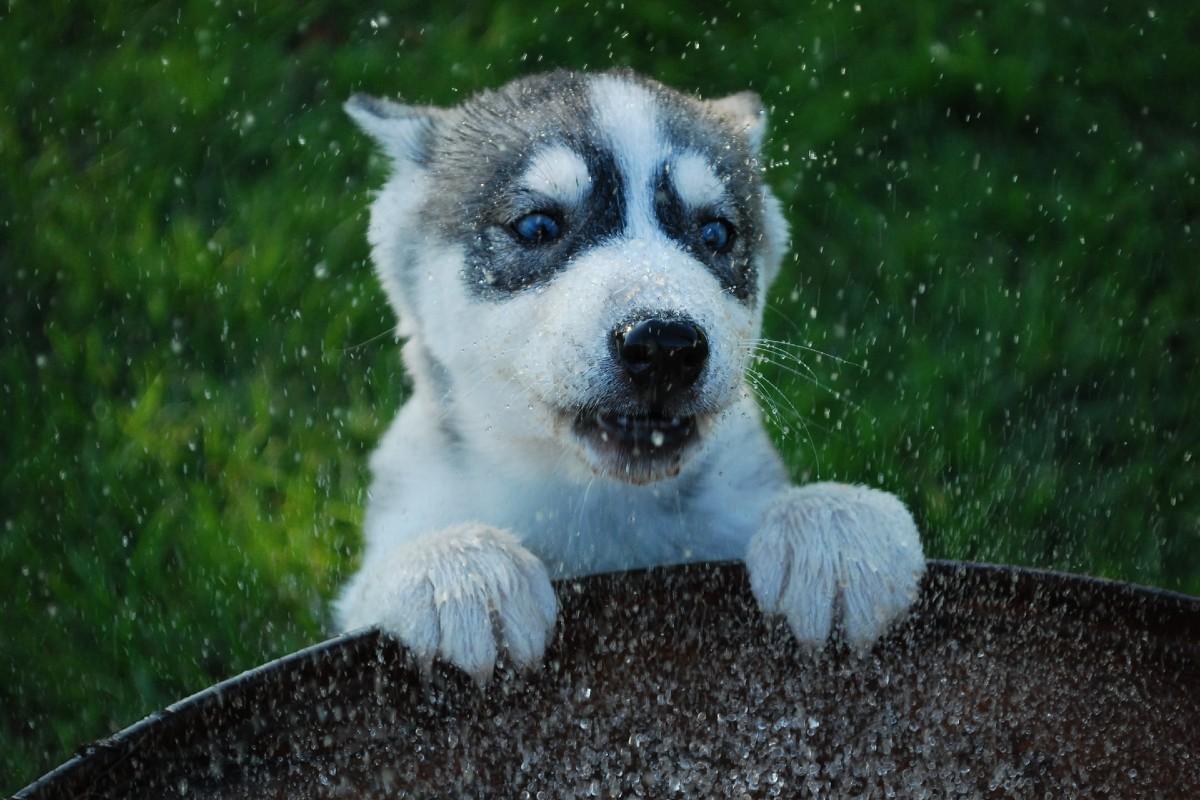 cucciolo di cane sbava