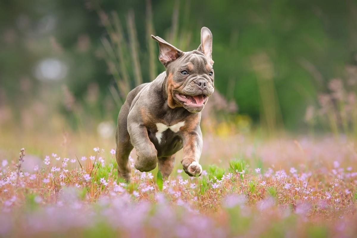 cucciolo corre
