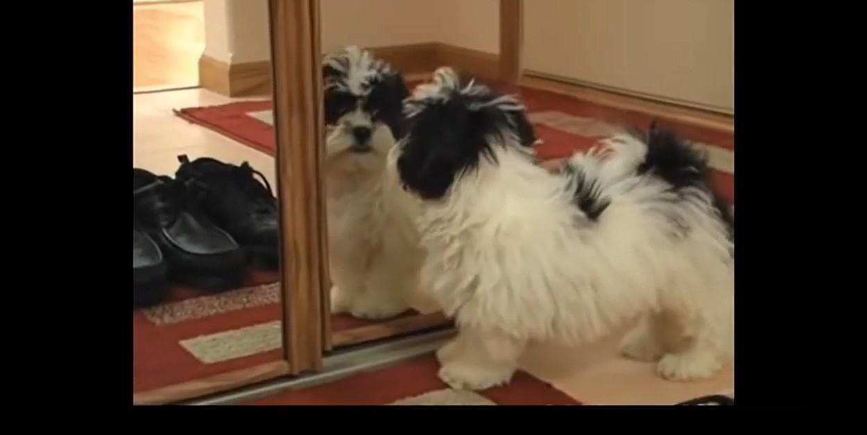 cucciolo di cane scopre lo specchio