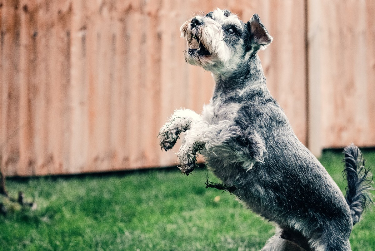 cane in piedi