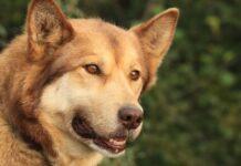 cucciolo di cane vuole uscire per passeggiata trasmettere messaggio video