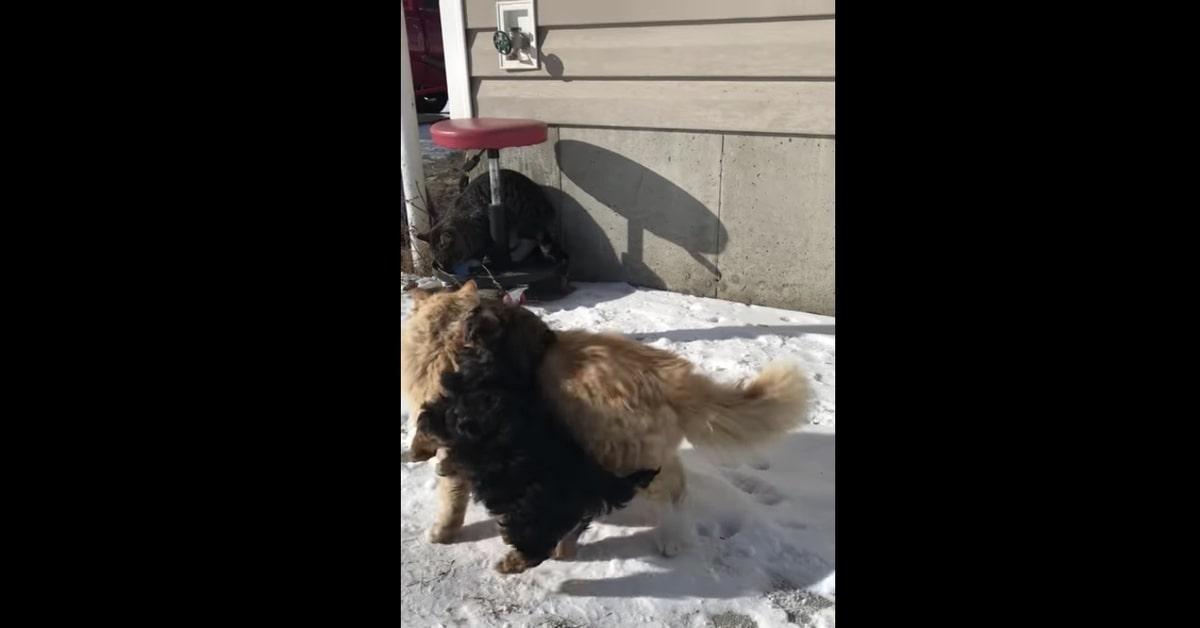 gatto non vuole giocare con il cucciolo