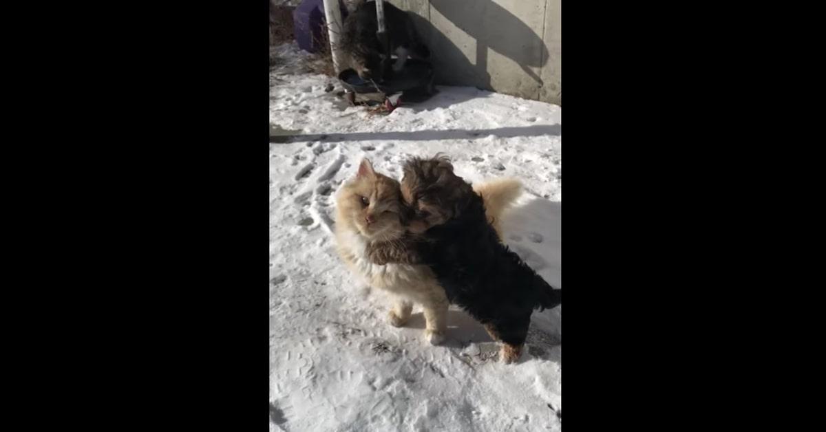 cucciolo vuole giocare con gatto asociale