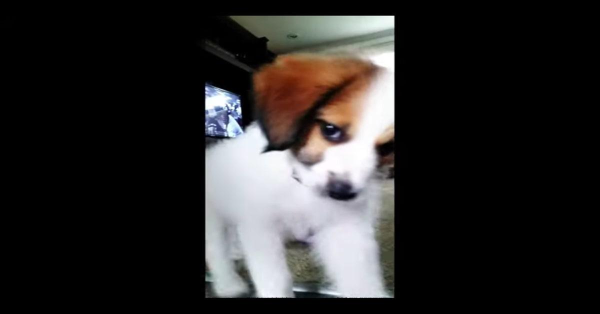 cucciolo si rifiuta di esser filmato dal padrone