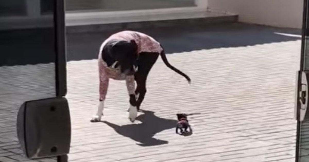 cane adulto spaventato da cucciolo