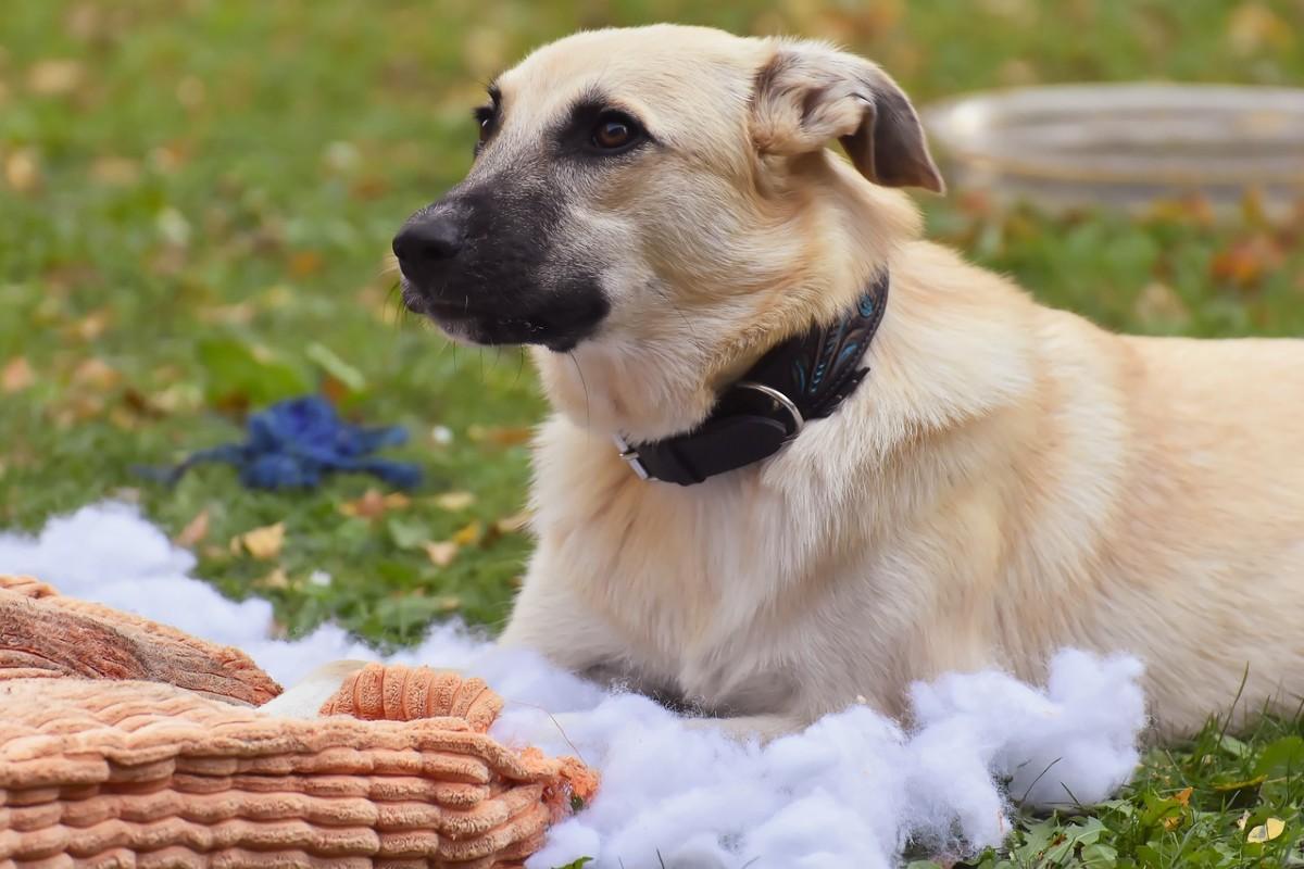 cucciolo che rompe oggetti