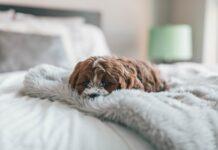 danni del cucciolo di cane