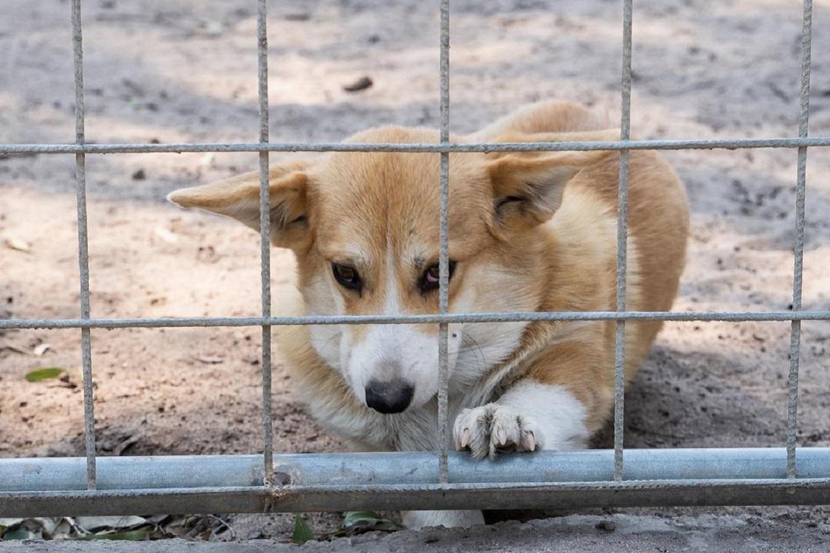 cane rinchiuso in un canile