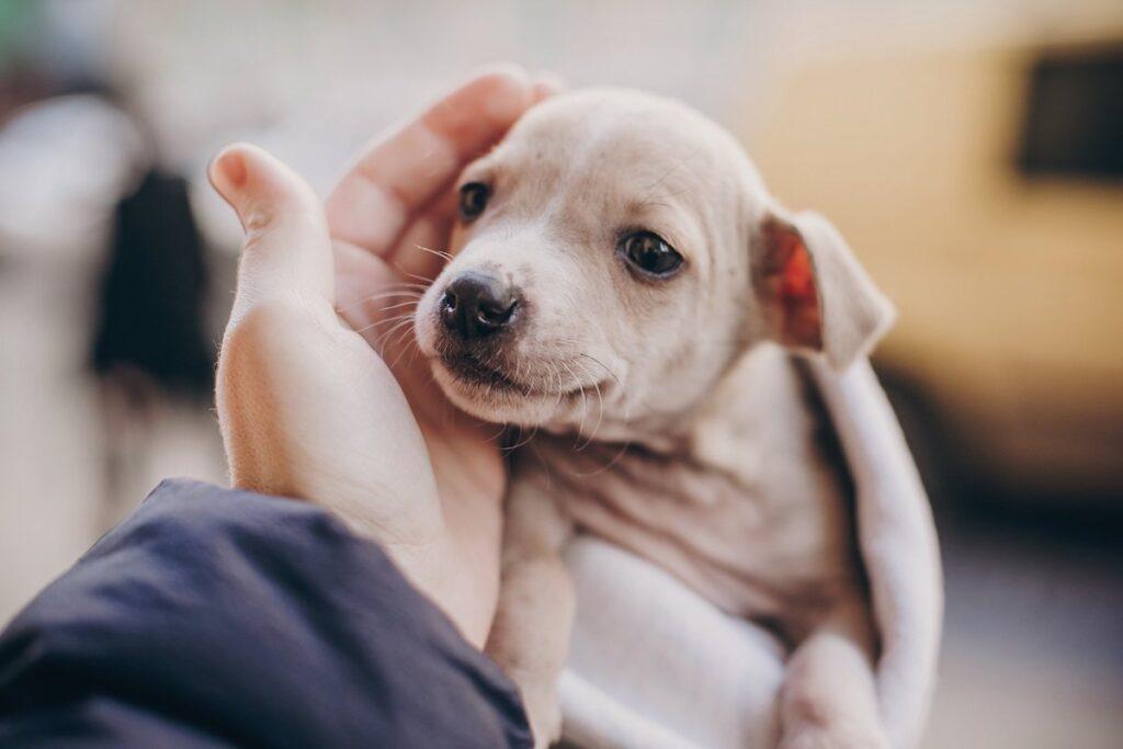 Dove prendere cuccioli di cane in modo sicuro
