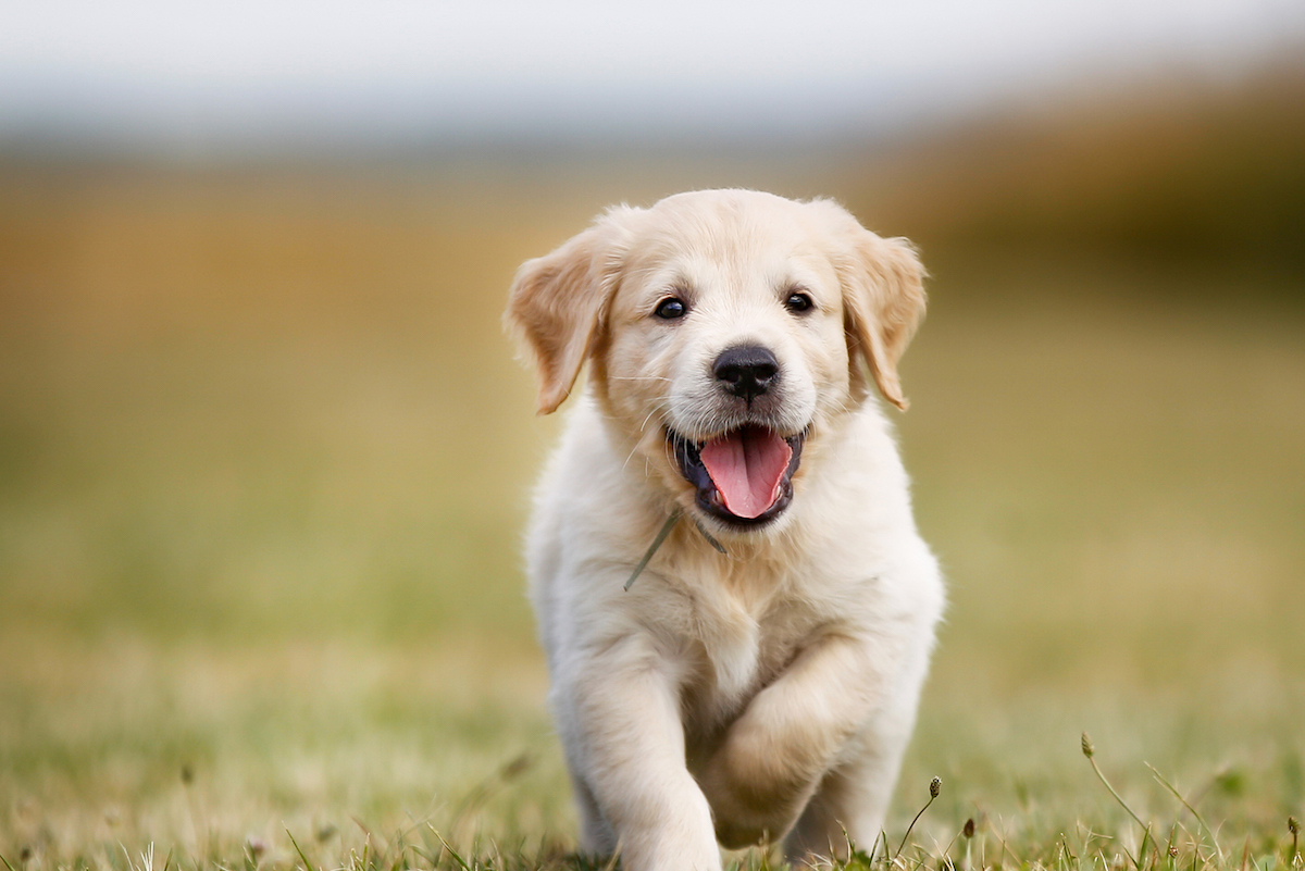 dove prendere cuccioli di cane