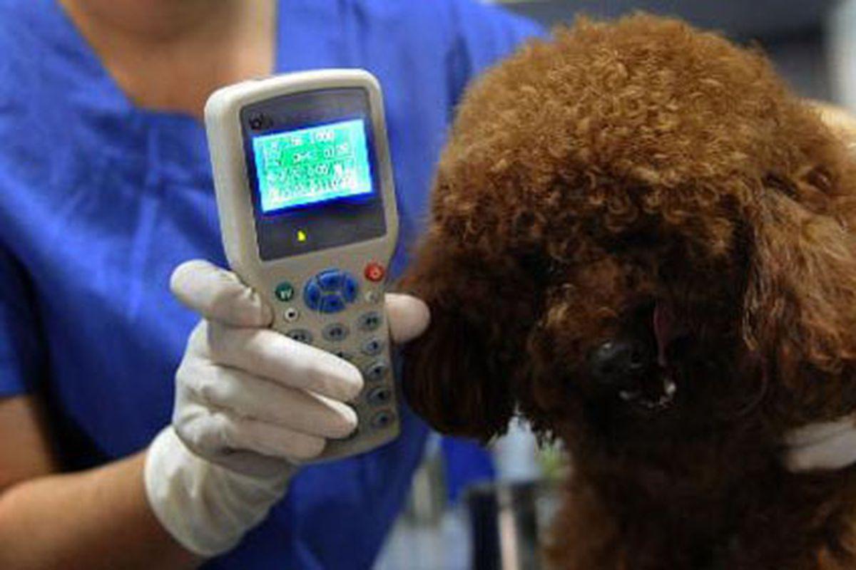 Dove si mette il microchip al cane? I punti esatti