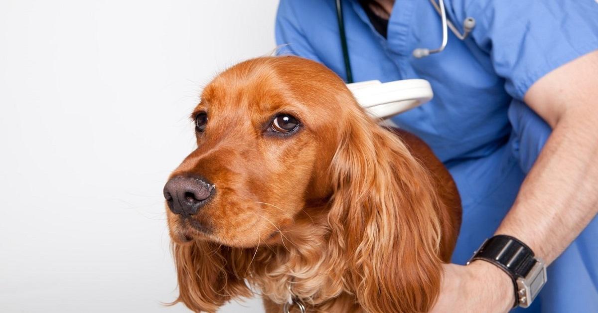 ricercare il microchip nel cane