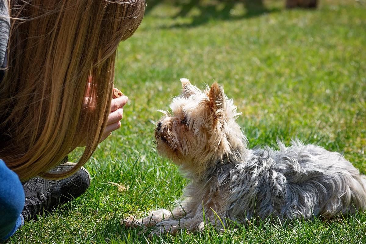 addestrare un cucciolo di cane