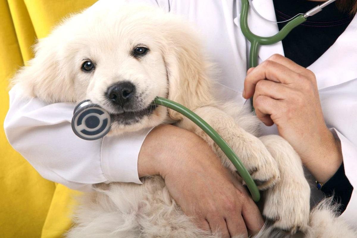 cane con steroscopio in bocca