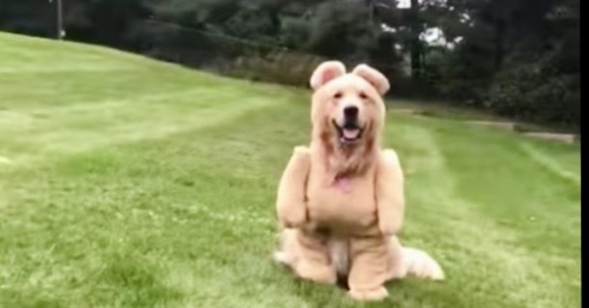 cane vestito da orsacchiotto di Peluche