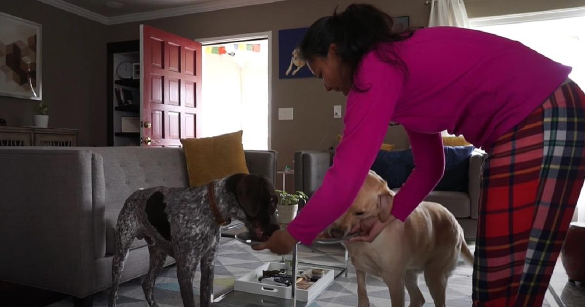 """I cuccioli di cane restano soli a casa per fare la """"sfida della pancetta"""", il risultato in video è imprevedibile"""