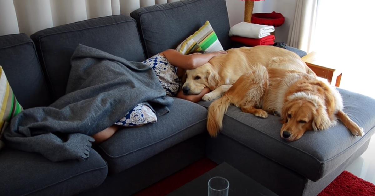 I cuccioli Golden Retriever notano che la mamma non sta bene, la loro reazione in video è incredibile