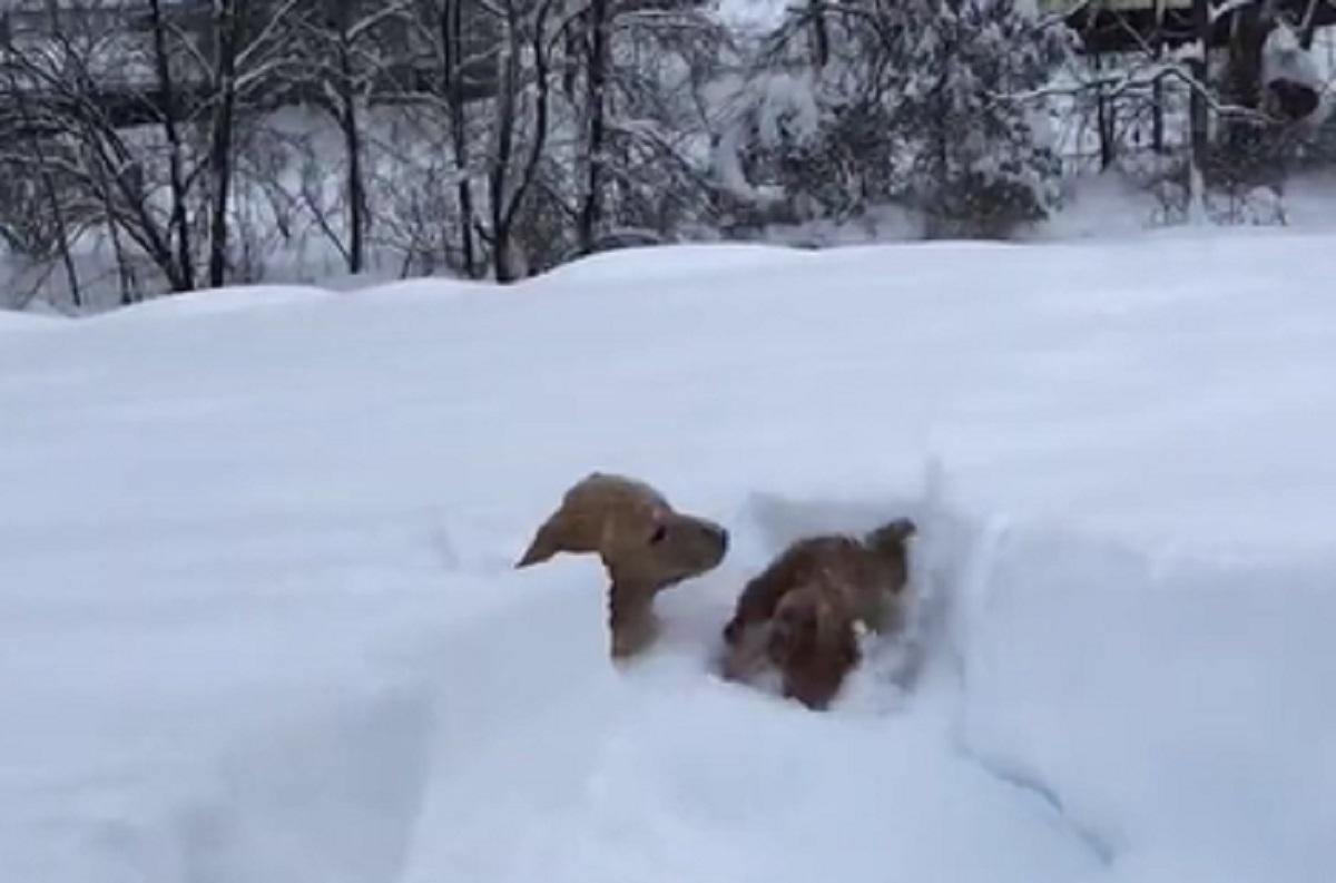 cuccioli attraversare neve