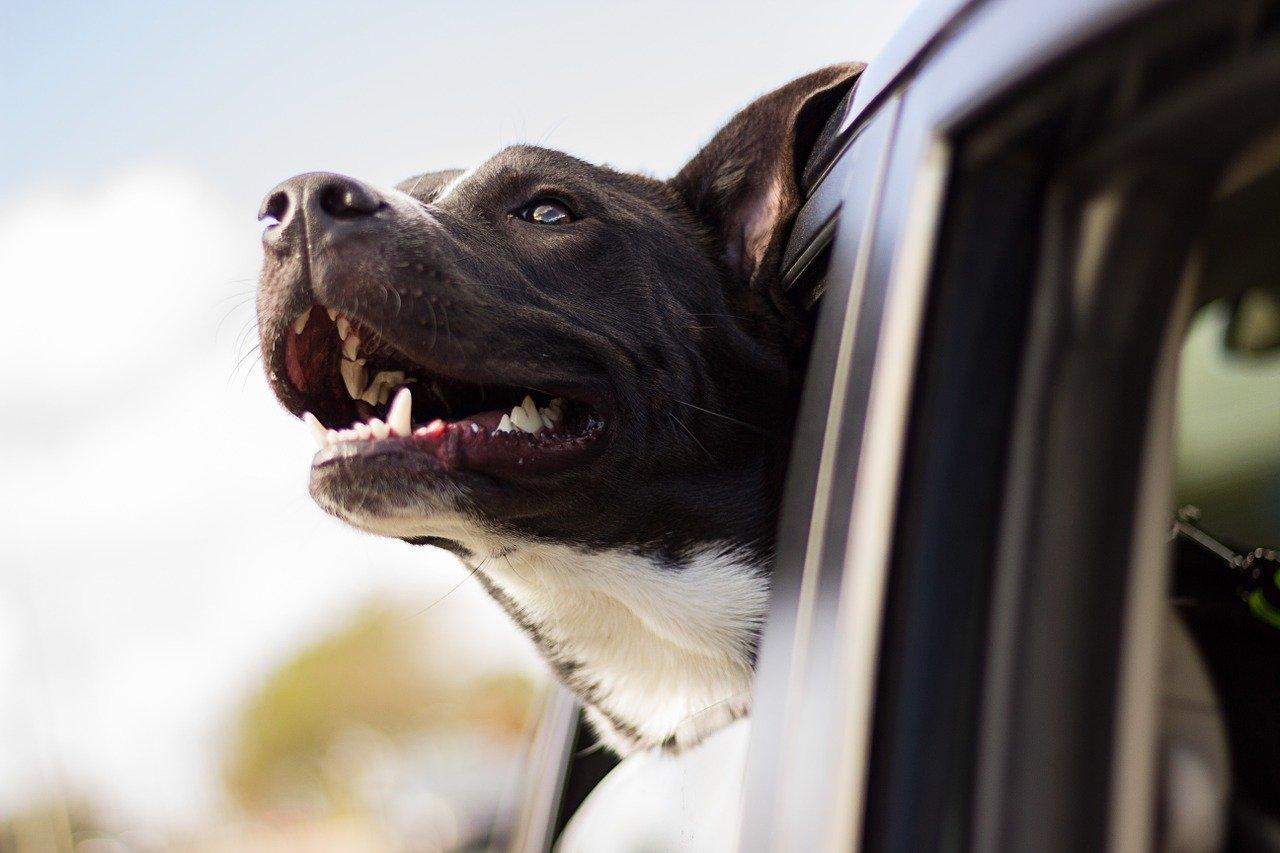 Il cane è empatico o non capisce le nostre emozioni?