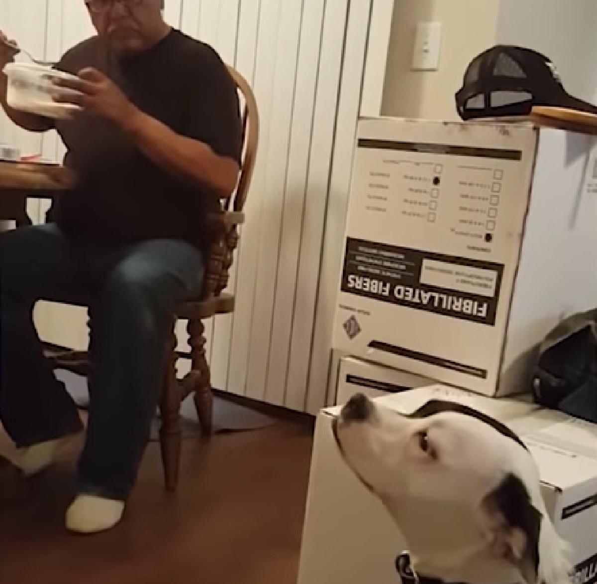 marley cucciolo bo-jack terrier volge sguardo altra parte