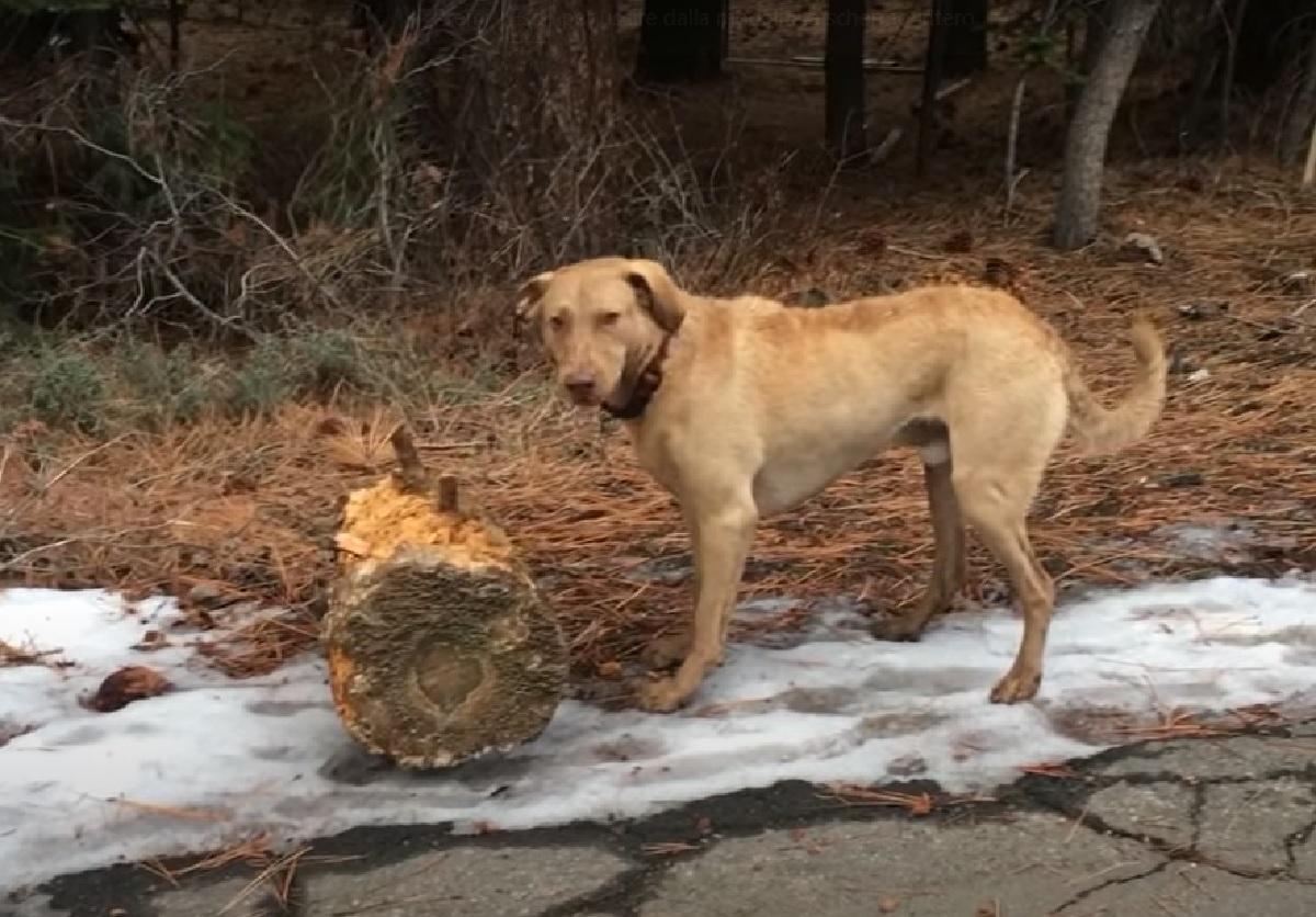 wally cucciolo tronco abitudine