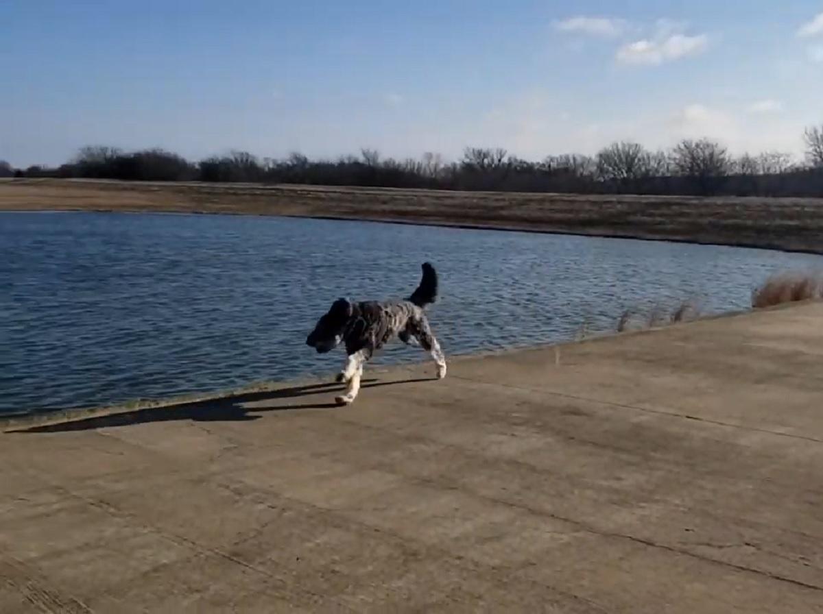 Il cucciolo di cane adora svegliarsi la mattina e correre come ci mostra il video