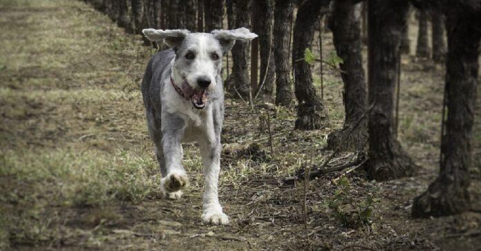 cucciolo cane adora svegliarsi mattina correre come ci mostra video