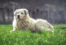 cucciolo cane abitudine indicare gli altri animali video