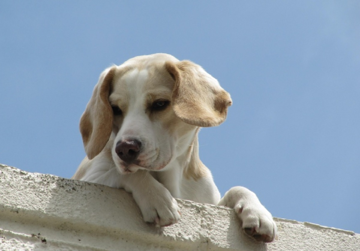 jacky cane amore infinito proprietario