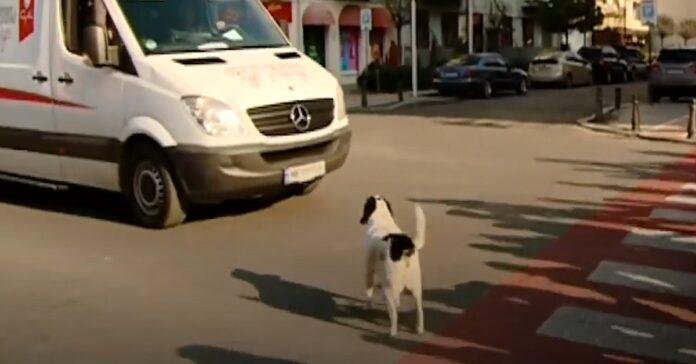 cane fermare traffico