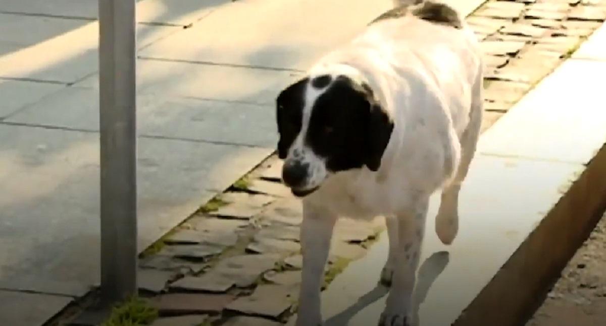 Il cucciolo di cane si mette a bloccare il traffico, il motivo del gesto nel video vi farà commuovere
