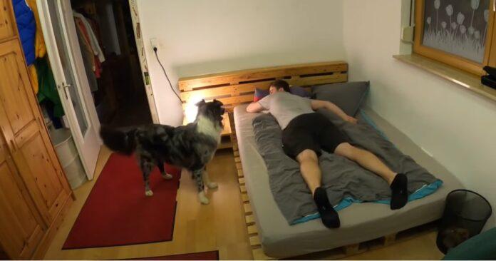 cucciolo mette a letto papà