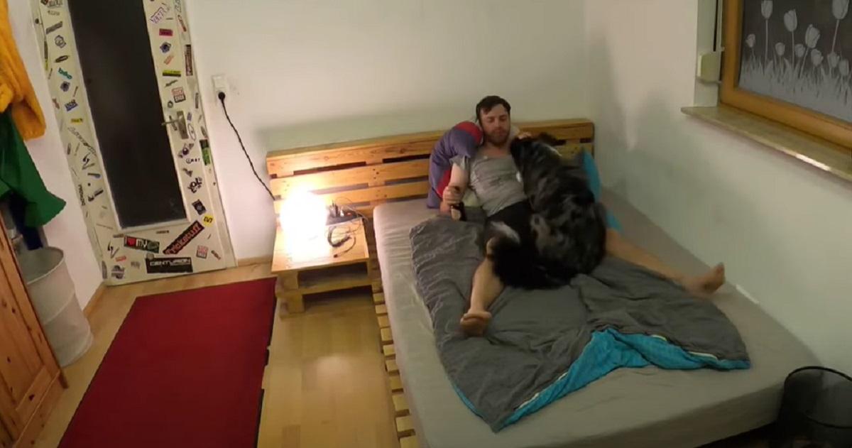 Il cucciolo di Pastore Australiano aiuta il papà stanco a mettersi a letto, il video è qualcosa di meraviglioso