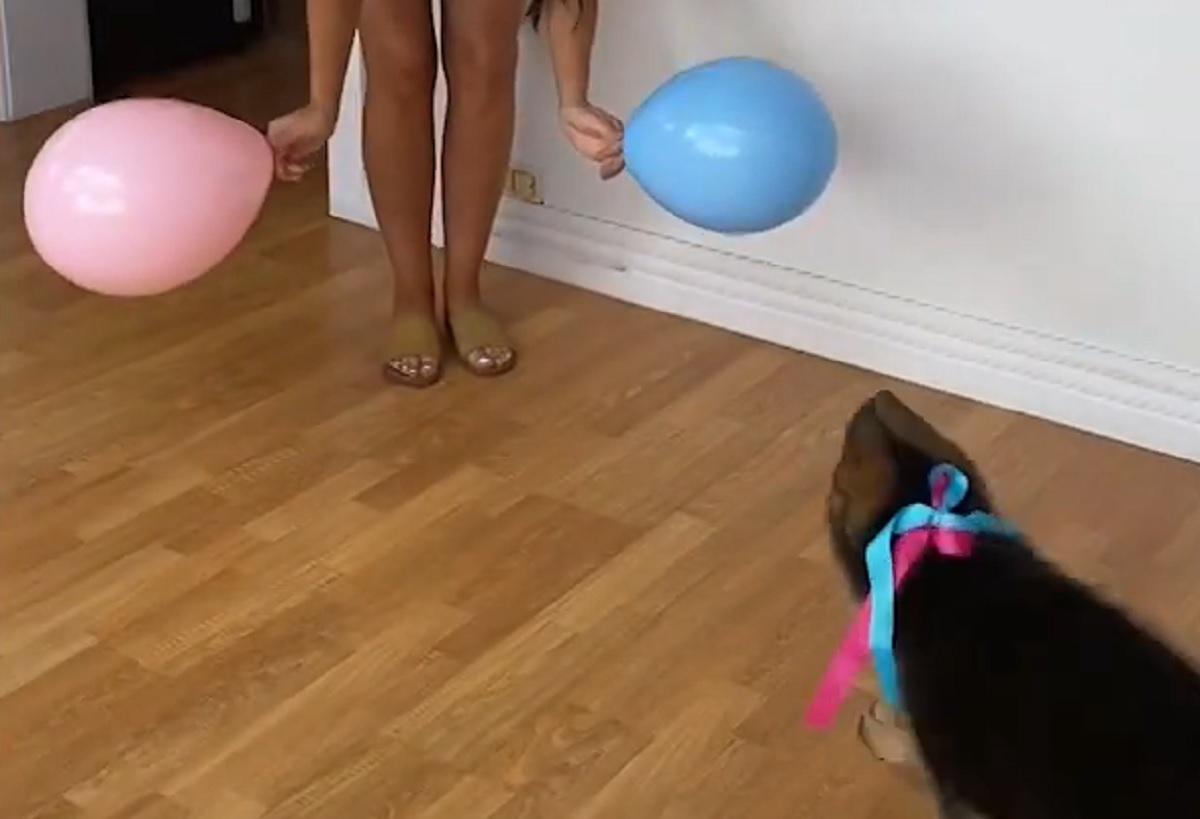 cane palloncini sceglie