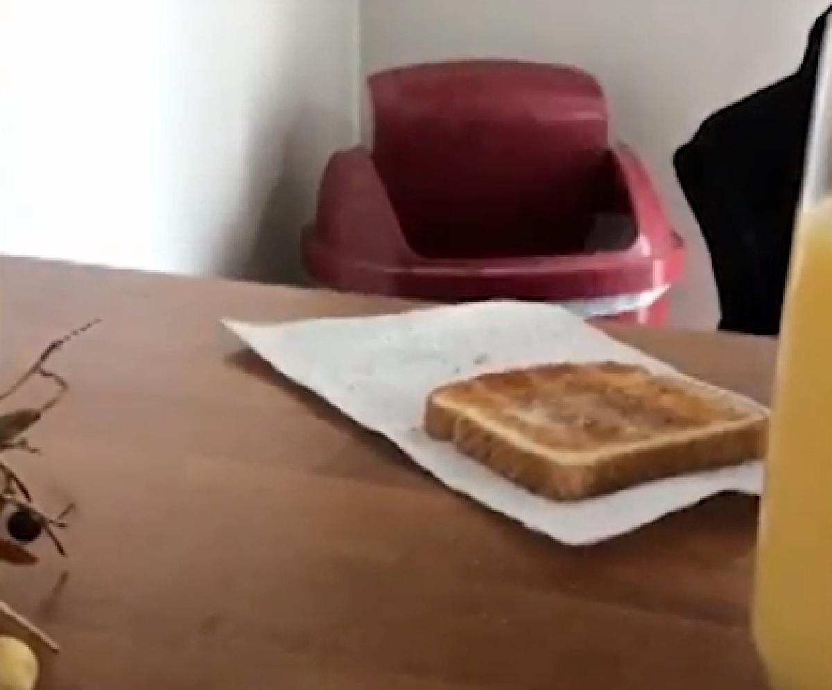 Il cucciolo Fox Terrier è ossessionato dai toast, il video è formidabile