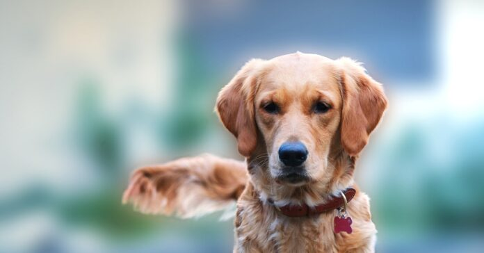 cane parco giochi