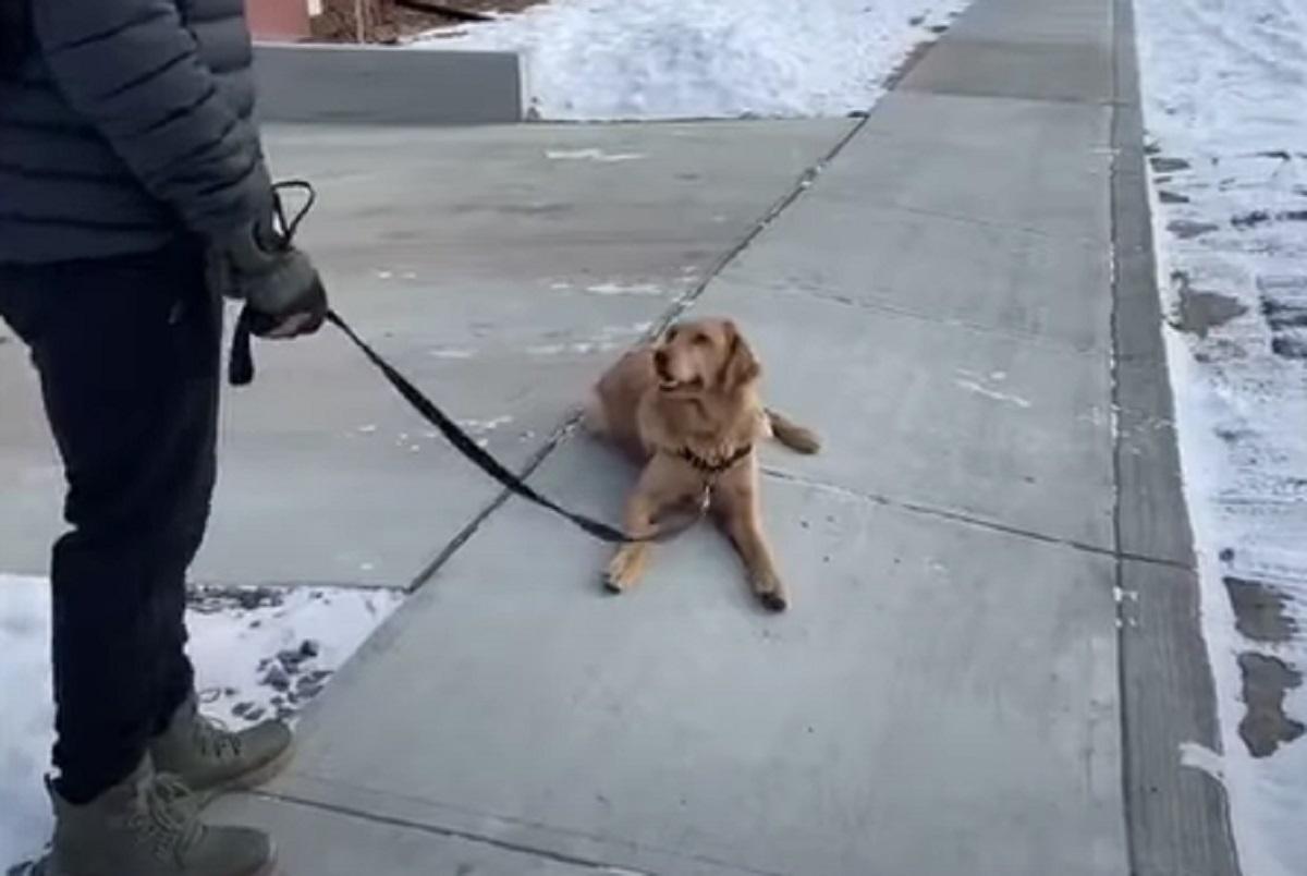 proteste cane parco