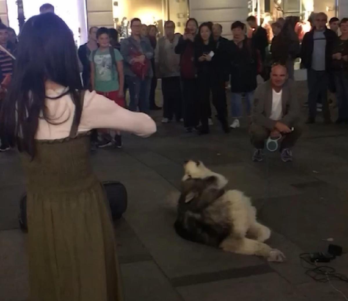 cucciolo husky piazza municipio vienna